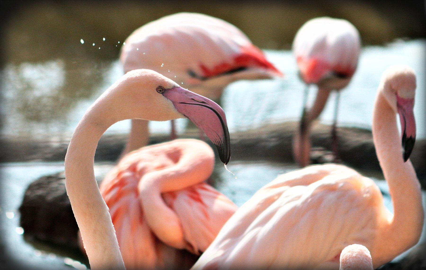 Rosa Flamingos im Zoo Hellbrunn in Salzburg