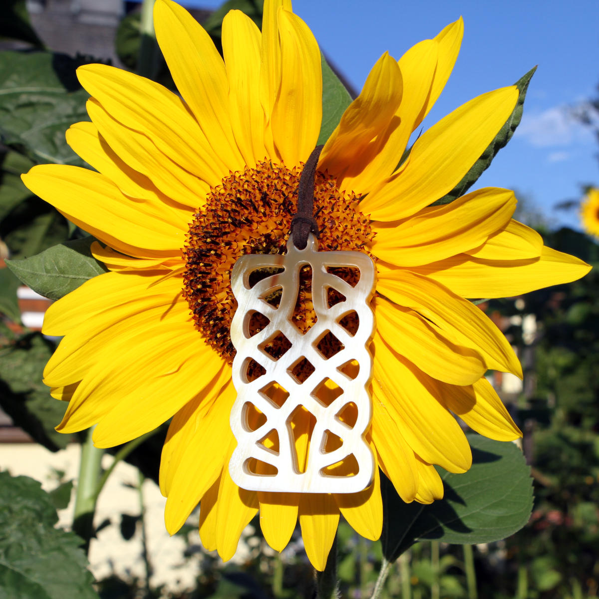 Celtic knot style pendant on a sunflower