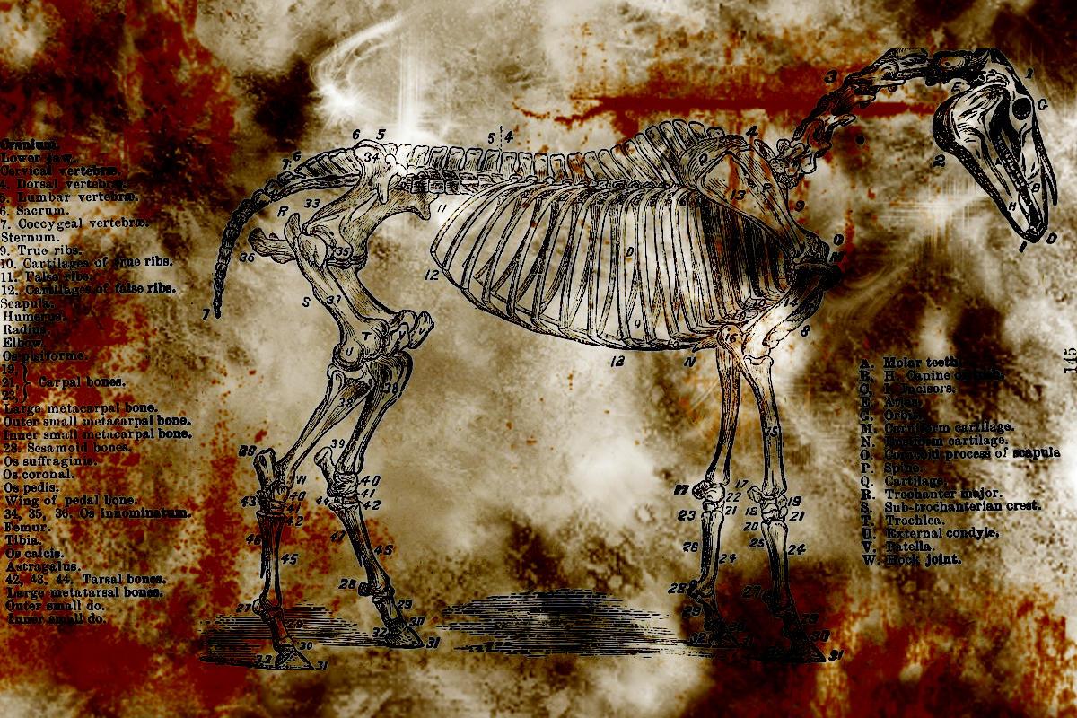 Schnitzel, Pferde und Psioniker