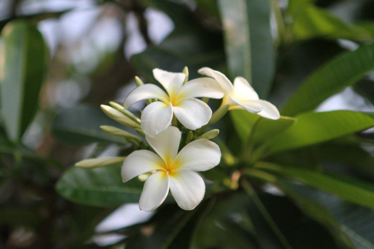 Hübsche weisse Blumen
