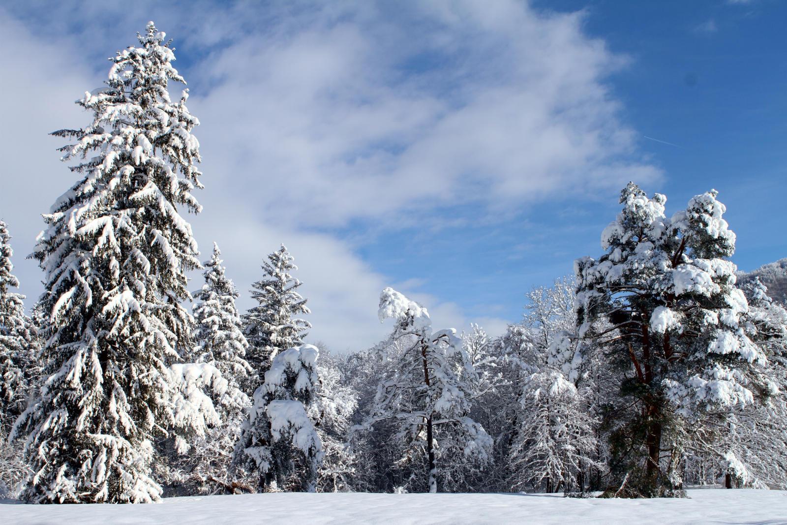 Wie entsteht eigentlich eine Schneeflocke?